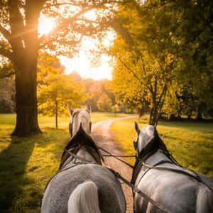 Gently winding carriage driveway in the Mošnice Landscaped Park, the routing of which allows in-hand driving of team of horses.