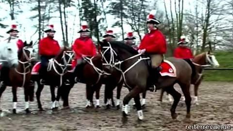 Pferde im Karnevalstraining