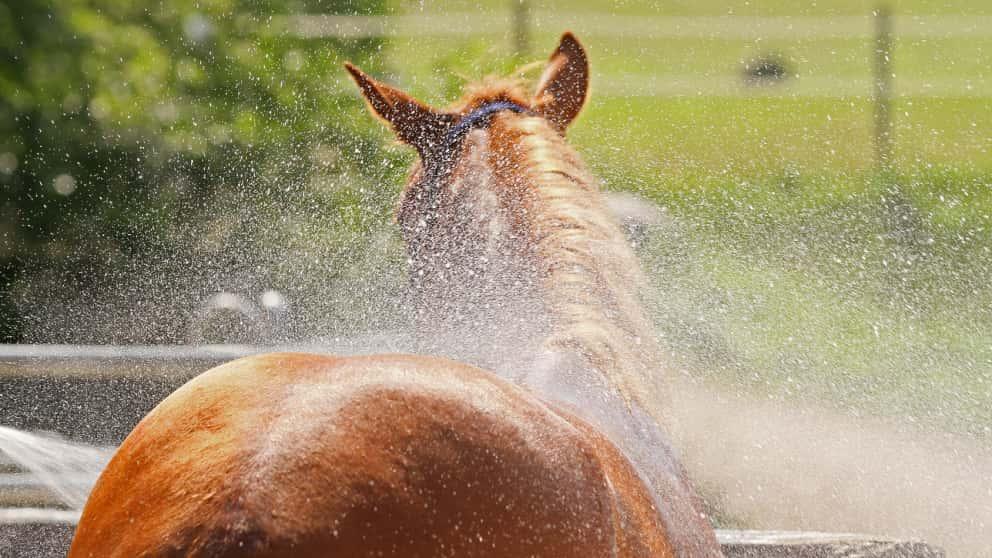 Pferd Abduschen